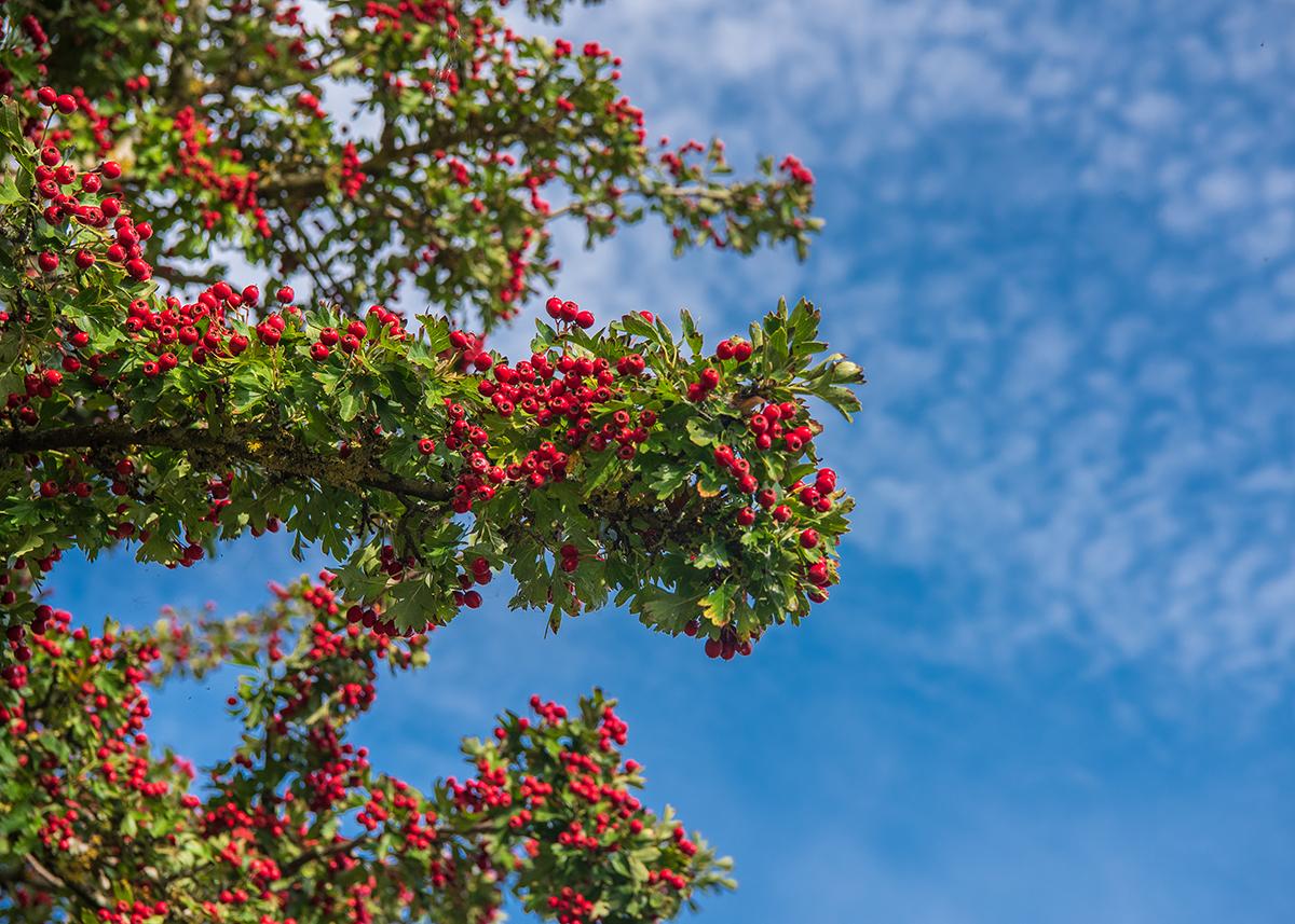 Improving your landscape photography