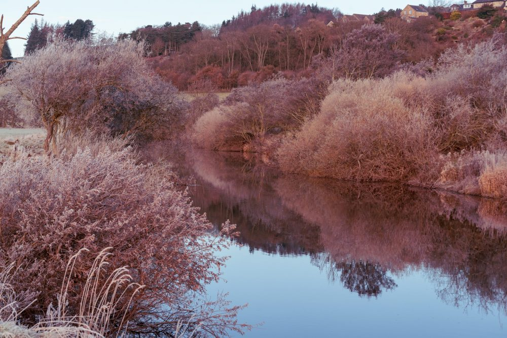 pink winter sunrise on the River Coquet