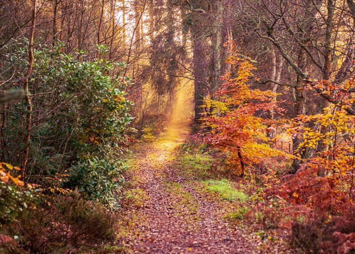 Guiding Light - Callaly Northumberland
