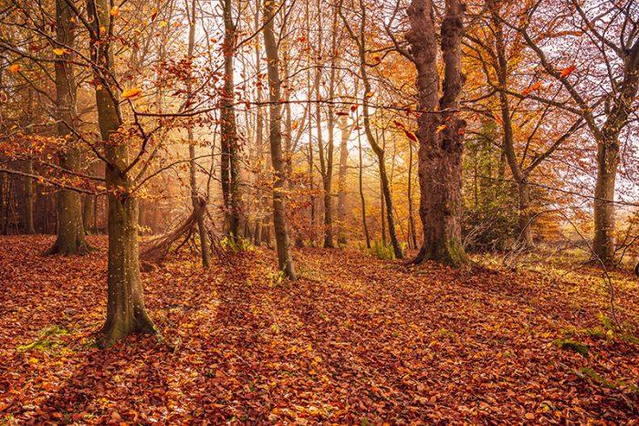Autumn Glow - Callaly Northumberland